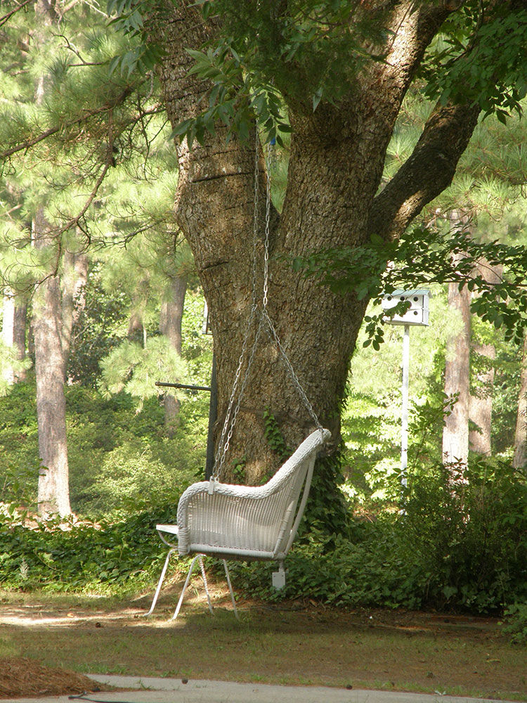 wicker chair under large tree