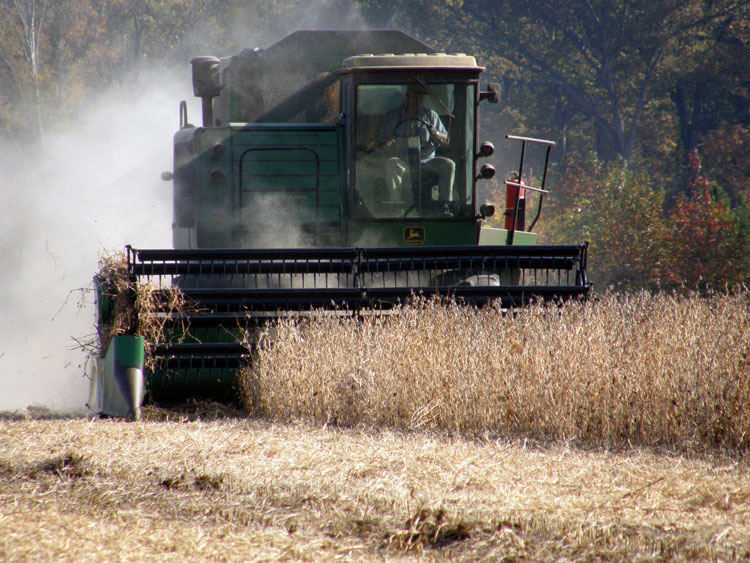 large soy bean harvester
