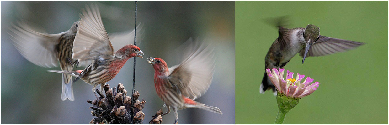 Two close-up photos of birds